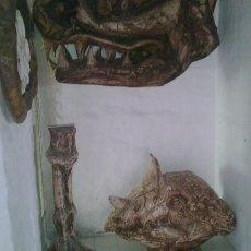 Museo de Resina, reproducciones tecnica paleo art